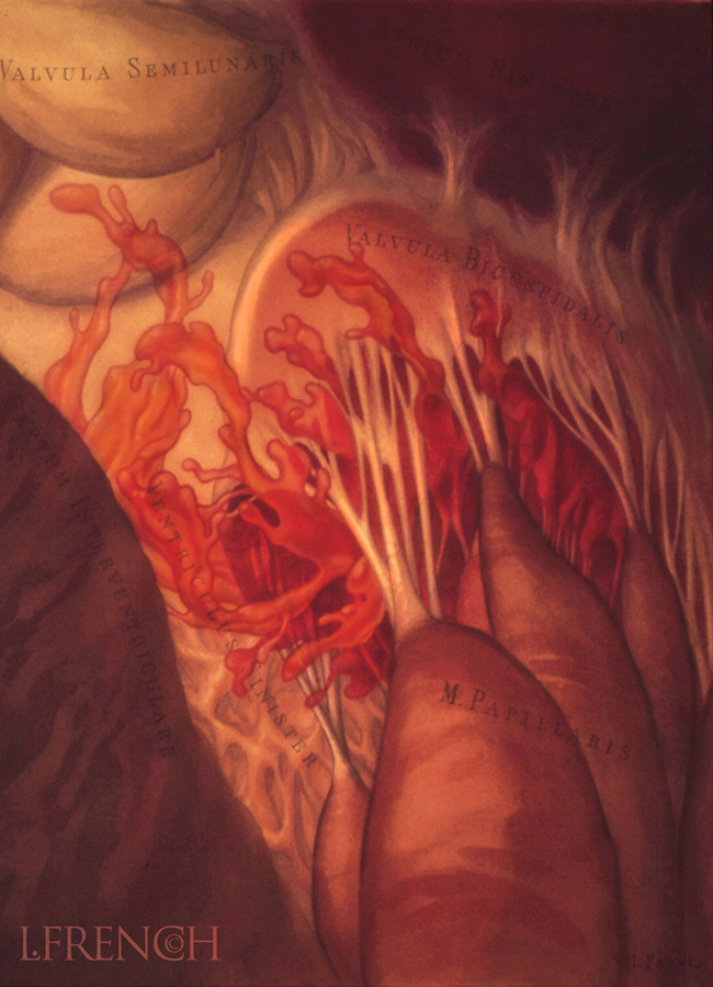 Blood Flow into the Left Ventricle, for Critical Care Nursing Magazine cover