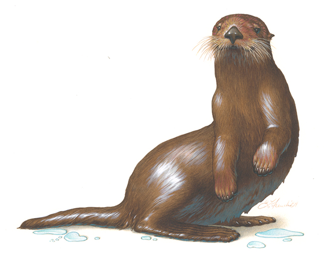 Sea Otter, California Tourism magazine ad, gouache