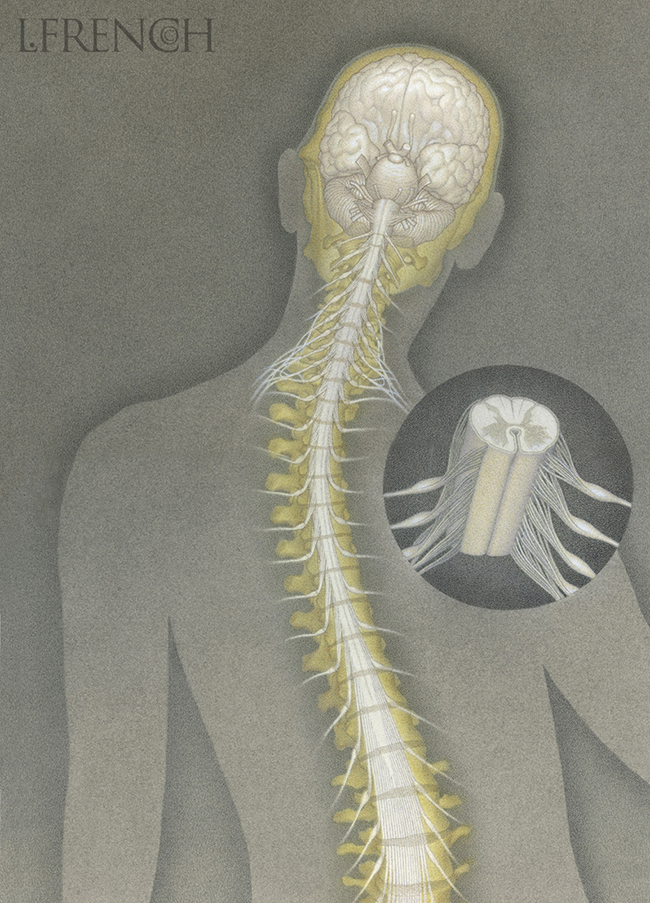 Spinal Column, for Critical Care Nursing Magazine cover
