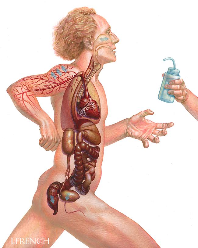 Water Loss in the Body, for Runner's World Magazine